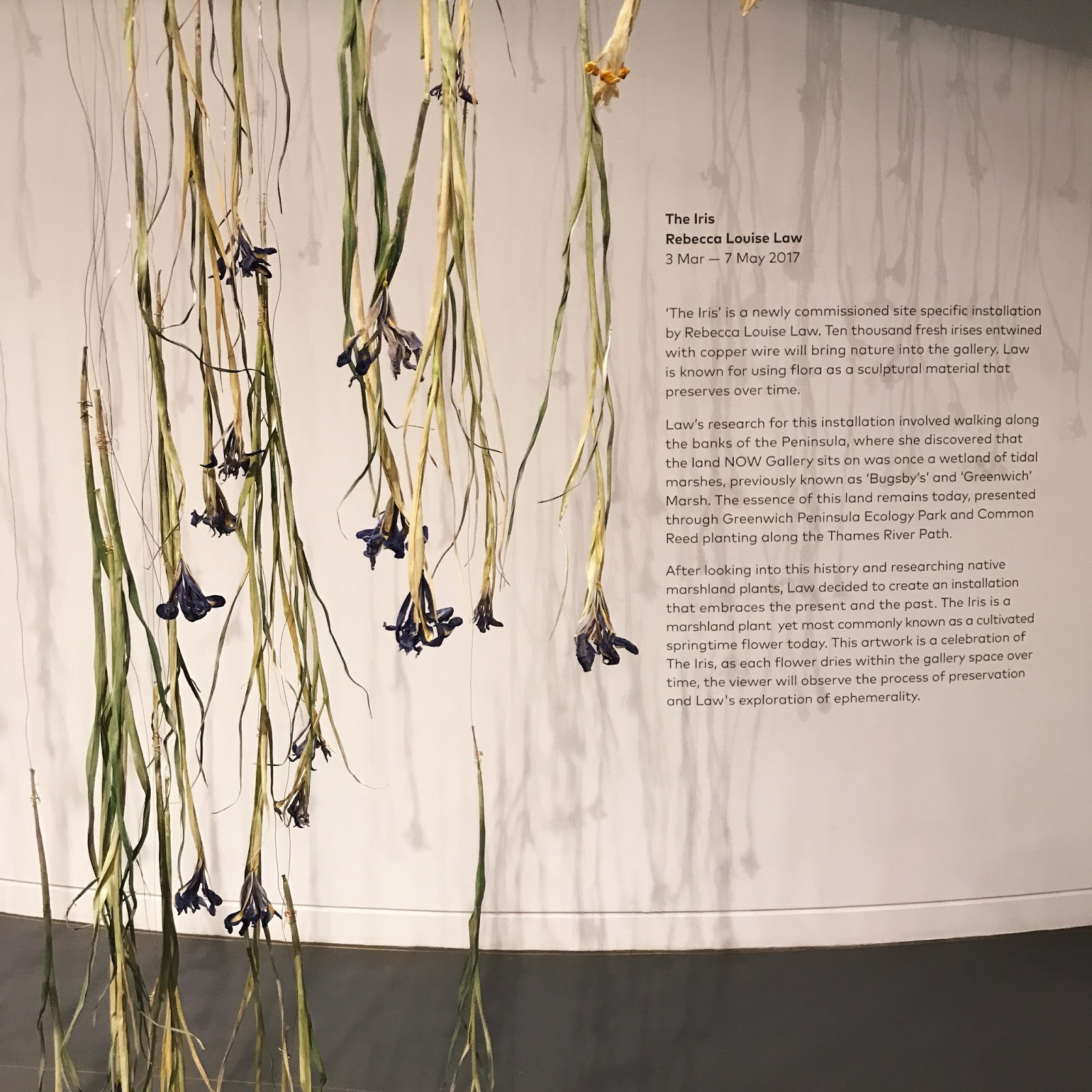 Iris falling flower installation at Now Gallery