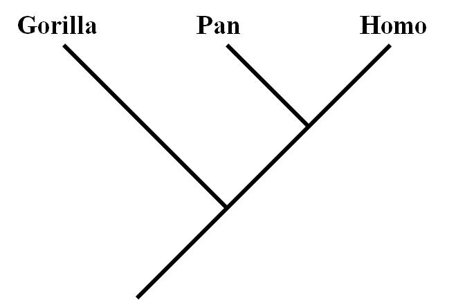 APE: Some thoughts on the phylogenetic relationships