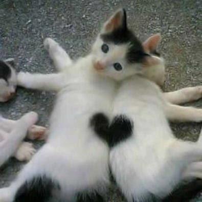 Top Grappige afbeeldingen: Grappige afbeeldingen; Katten en liefde &RW98