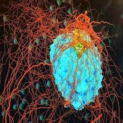 Novos medicamentos podem vencer o câncer em 10 anos