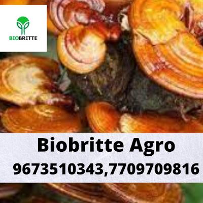 Buy Ganoderma Mushroom Online