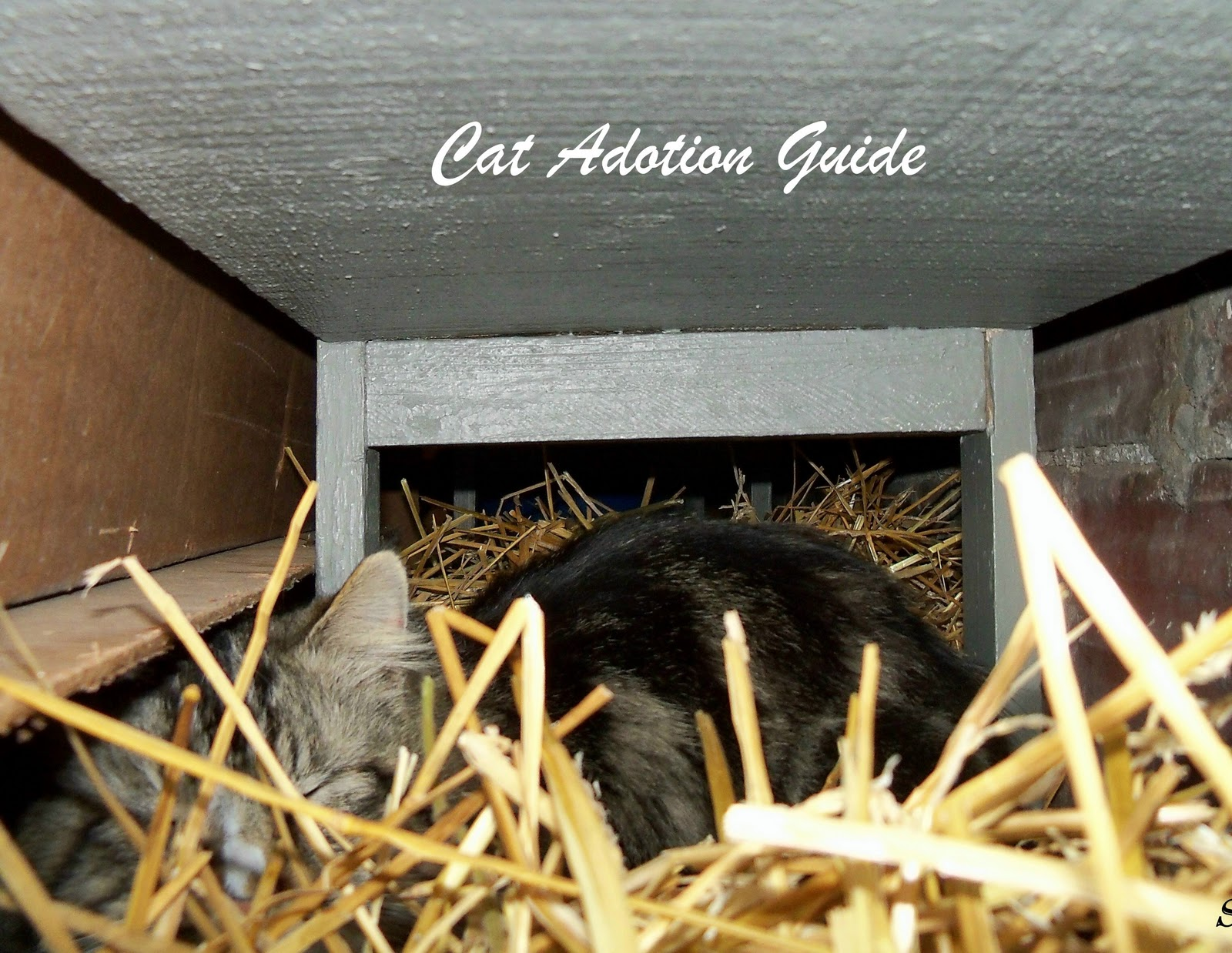 Cat Adoption Guide My Garage Keeps Outdoor Cats Warm In