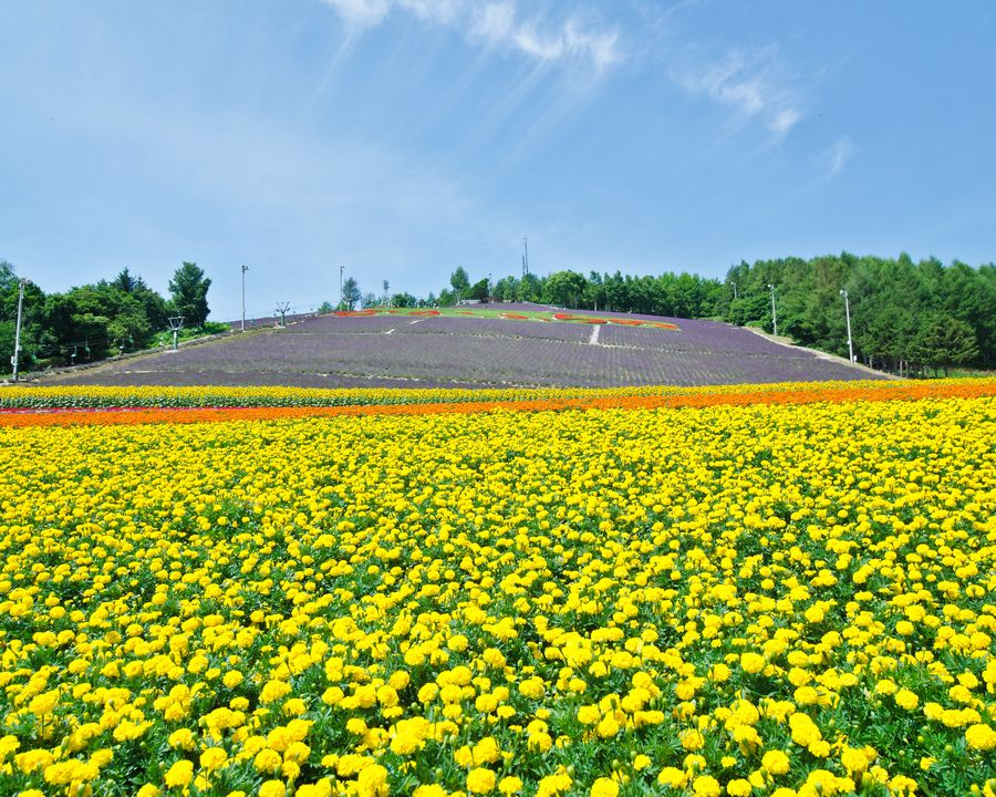 31. Biei and Furano flower fields, Hokkaido, Japan by Jansen Tang