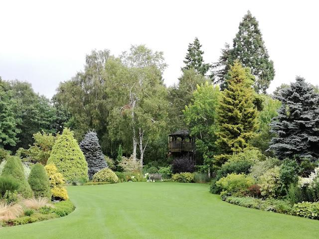 iglaki w ogrodzie