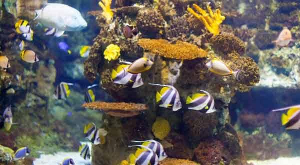 Memilih dan Membeli Ikan Hias Yang Baik Untuk Dipelihara