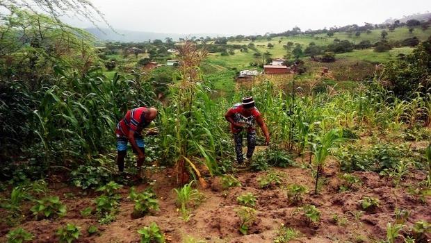Garantia-Safra já contempla 17 mil agricultores em Pernambuco