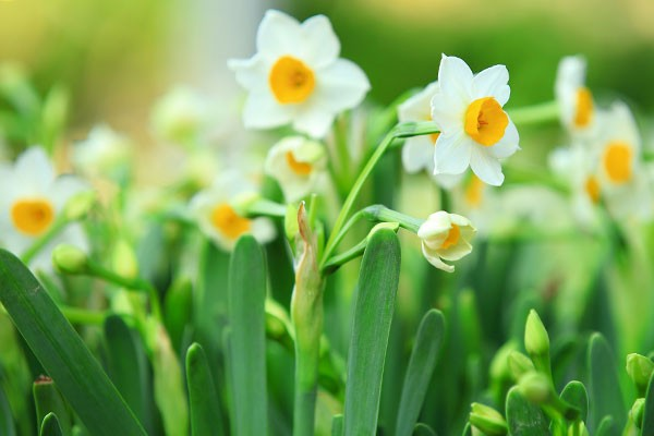 hoa thuy tien dep nhat 3