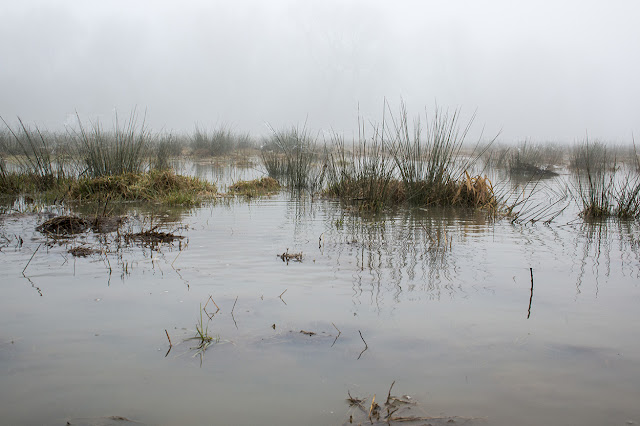 Dead Marshes