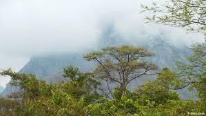 floresta mocambicana