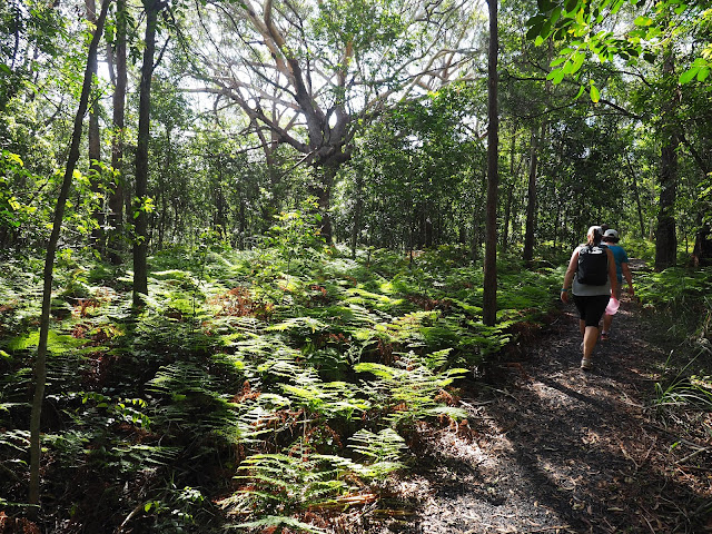 Walking Rainforest Track Diamond Head Loop Walk