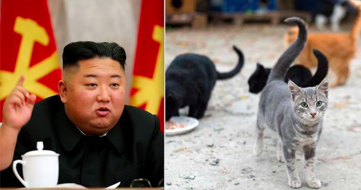 Kim Jong-un Orders The Killing Of All Cats And Pigeons In North Korea In An Effort To Stop The Spread Of CoViD-19