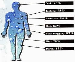 Manfaat Minum Air Putih Hangat Di Pagi Hari Terapi Sehat Ternyata Baik Untuk Kesehatan Tubuh