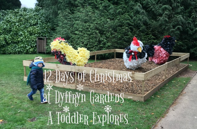 12-days-of-christmas-at-dyffryn-gardens-a-toddler-explores-text-on-image-of-toddler-and-3-hens
