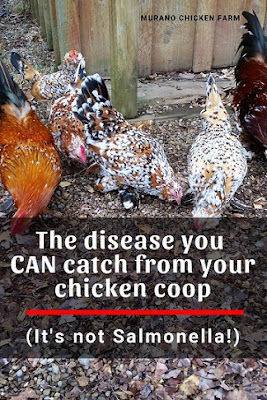 A disease you can get from the chicken coop.
