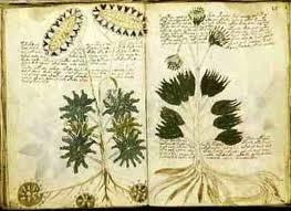 Rahasia Manuskrip Voynich Manuskrip Paling Misterius Di Dunia