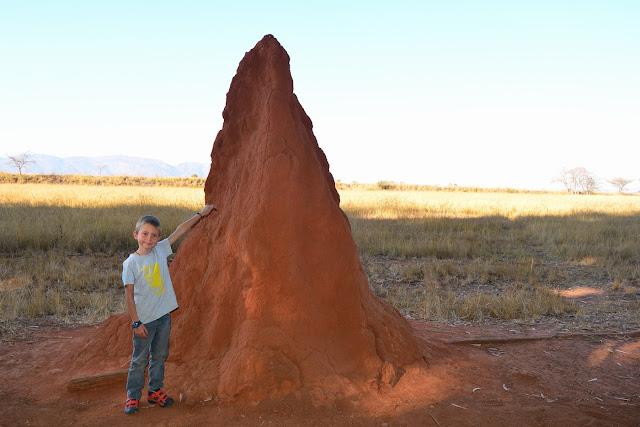 une belle termitière