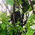 En mystisk häxknut en slags vril på träd.