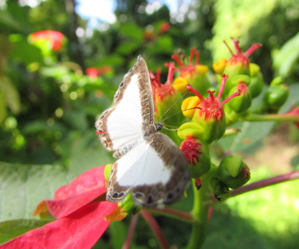 https://www.bioorbis.org/2019/08/qual-diferenca-entre-borboletas-mariposas.html