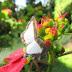Qual a diferença entre borboletas e mariposas?