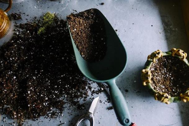 3 dicas para iniciar seu cultivo indoor