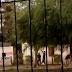(videos) SÁENZ PEÑA - SITUACIÓN LÍMITE: BALACERAS, KIOSCOS DE DROGAS Y  DESMADRE DE INSEGURIDAD Y VIOLENCIA EN BARRIOS PERIFÉRICOS
