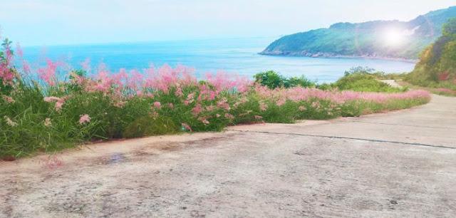 Những hình ảnh đẹp về Đà Nẵng 5