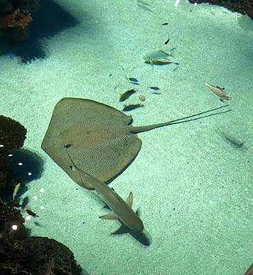 The National Aquarium in Baltimore Maryland