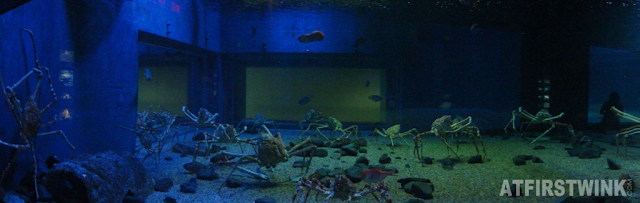 Osaka Aquarium Kaiyukan giant spider crabs aquarium water tank