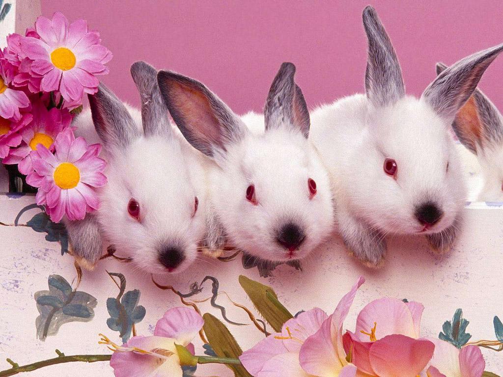 Imágenes Tiernas De Conejos Animados