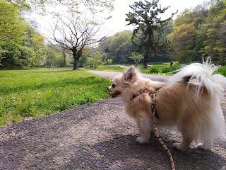 チワワのいる暮らし チワワはとっても飼いやすい室内犬です