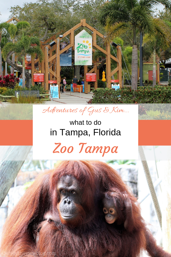 infographic of Zoo Tampa's entrance and a mother and baby orangutan