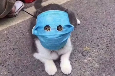 Kucing pakai masker di wajahnya
