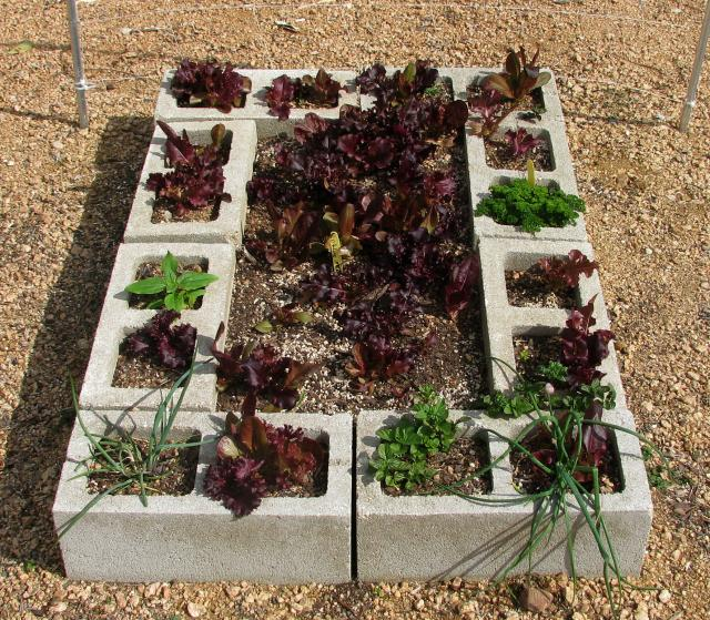 Concrete Block Garden Bed: Personality Is Preferred: Goodwill Find