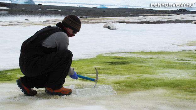 Kizöldült az Antarktisz