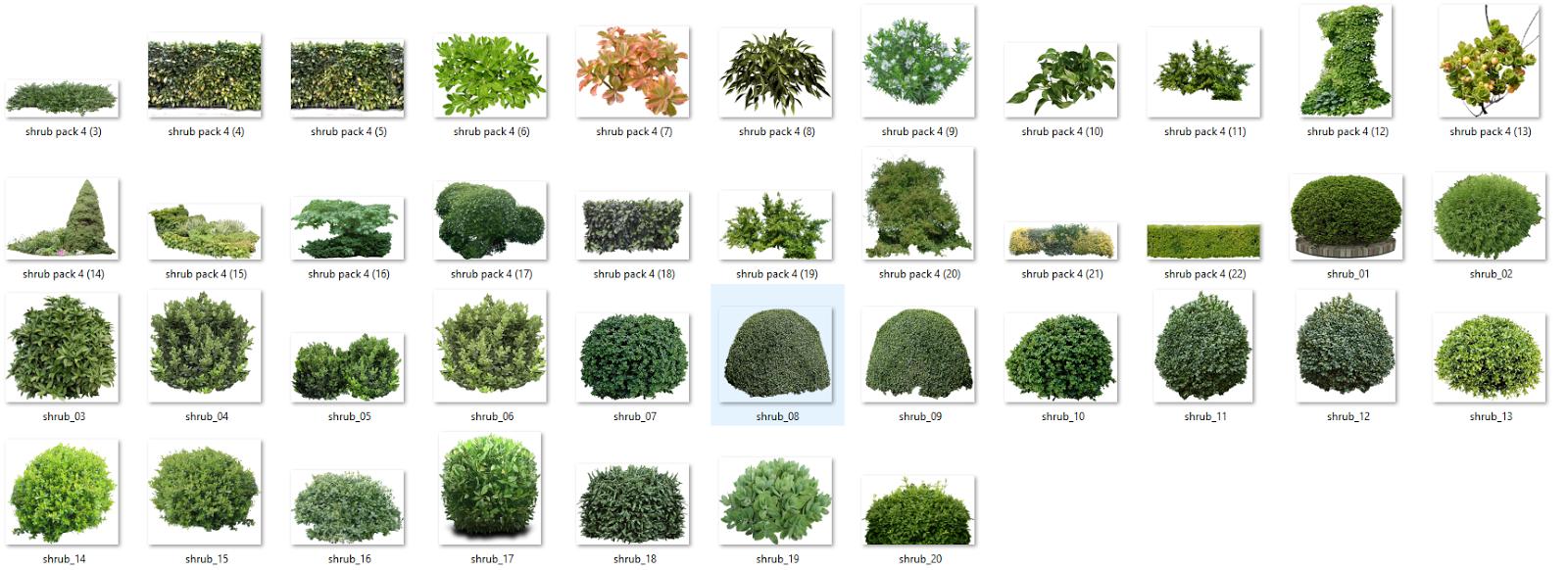 arboles y plantas en png