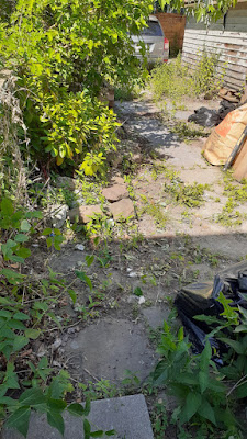 Toronto East York Backyard Summer Garden Cleanup Before by Paul Jung Gardening Services--a Toronto Organic Gardening Company