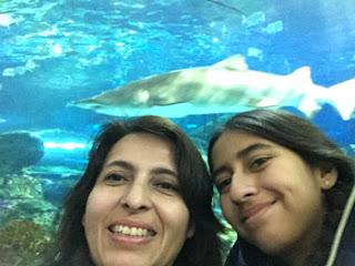 Canada, CN Tower, Ripley's Aquarium of Canada, Toronto, acuario en Toronto, que hacer en Toronto, que visitar en Toronto, Toronto con niños