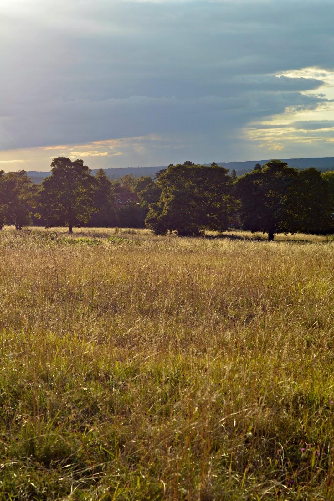 Field in Surrey