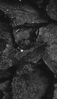 صور سوداء اللون