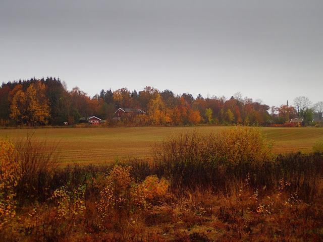 Rude norweskie pola