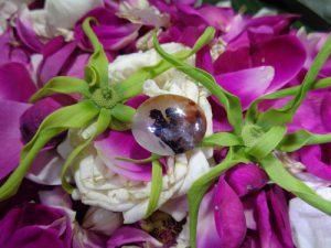 Batu Mustika Sero Kumbang, mustika mancing ikan, batu mustika mancing, batu mustika asli, mustika bertuah, batu bertuah, batu berkhodam