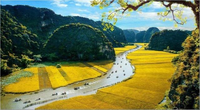 Sắc vàng Tam Cốc – Tràng An