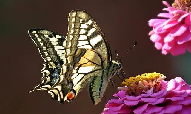 flowering plants that attract pollinators