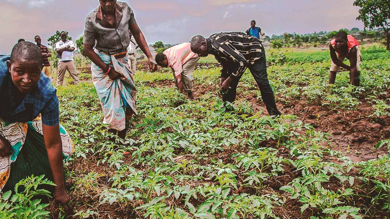 people work in agriculture in malawi africa most richest nation in africa