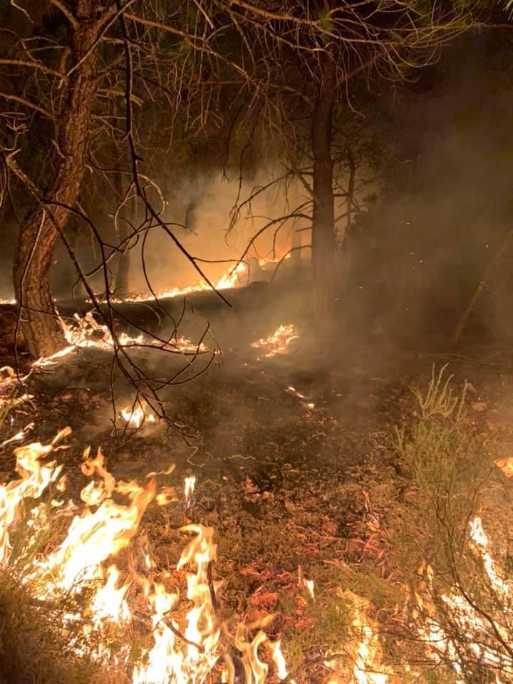 Έβρος: Ολονύχτια μάχη με τις φλόγες - Κινδυνεύει το δάσος της Δαδιάς
