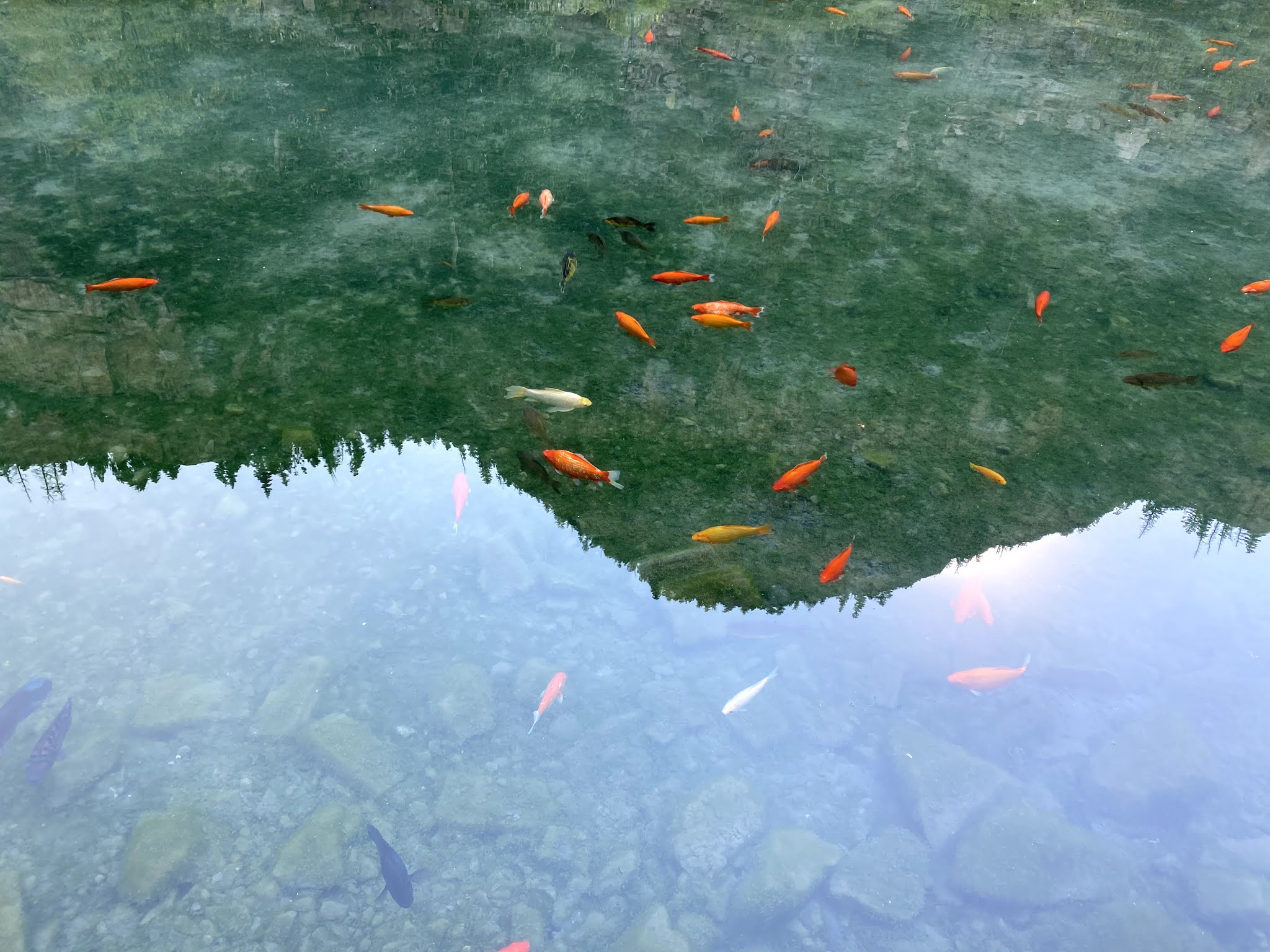 Goldfish Pond in Ouray, CO | biblio-style.com