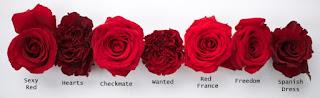 gambar bunga mawar indah 4