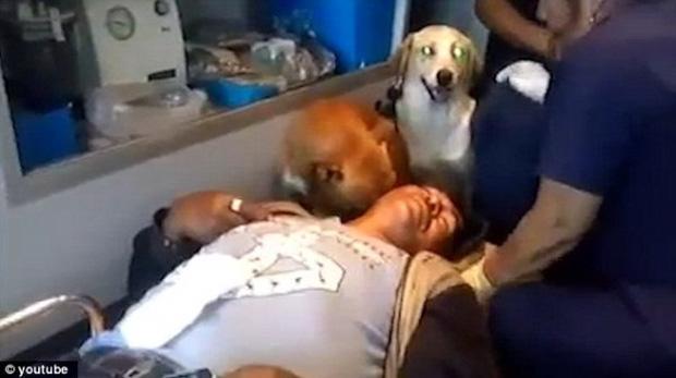 Hai chú chó trung thành nhất quyết nhảy lên xe cứu thương để chăm sóc cho chủ