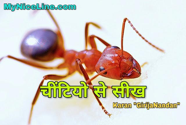 चींटियो से सीखें जिन्दगी बदलने वाली ये बातें | चींटियो से सीखें सफलता का सबक | चींटियो से शिक्षा | Lesson From Ants in Hindi. Learn From Ants in Hindi