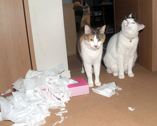 one of these two cats is guilty